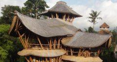 Saz kamış bambu dekorasyon ve çatı kaplama