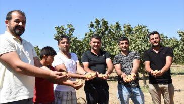Aydın'da kuru incir tezgahlarda yerini almaya başladı 20200816 2 43912064 57456901 Web