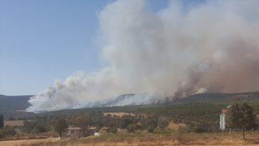 Uşak'ta orman yangını 20200903 2 44184083 57880213 Web