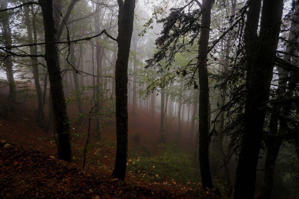 Sis bulutlarıyla kaplı Domaniç Dağları'nda sonbaharın ilk renkleri 20200907 2 44233399 57958377 Web
