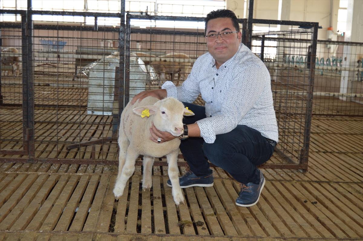 Üniversite özel sektör iş birliğiyle üretilen damızlık koyunlar yoğun talep görüyor 20200908 2 44246159 57973631 Web