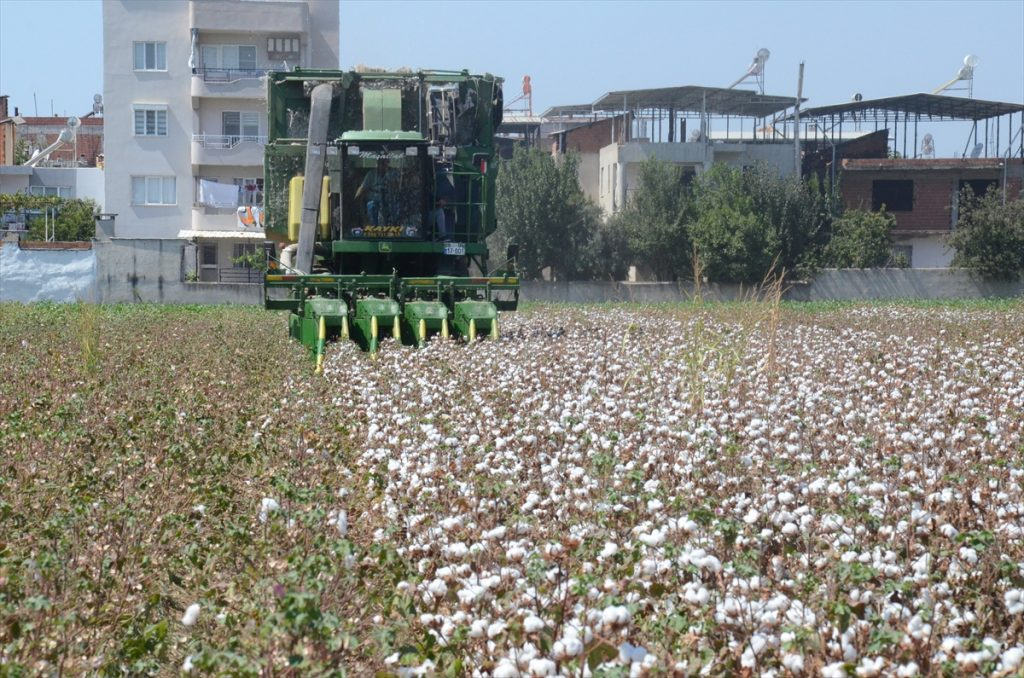 """İncirliova'da """"erkenci"""" pamuğun hasadı yapıldı 20200908 2 44255208 57987353 Web"""