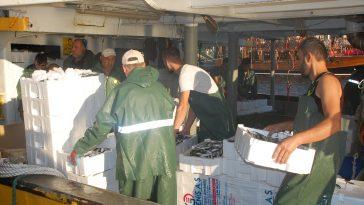 Didim'de balık bereketi didim de balik avi hareketlenmesi 5