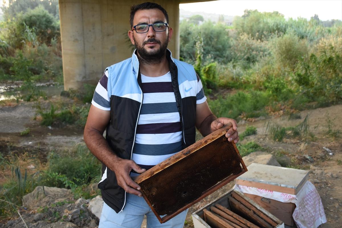 Germencik'te arı kovanı hırsızlığı germencik te ari kovani hirsizligi 4