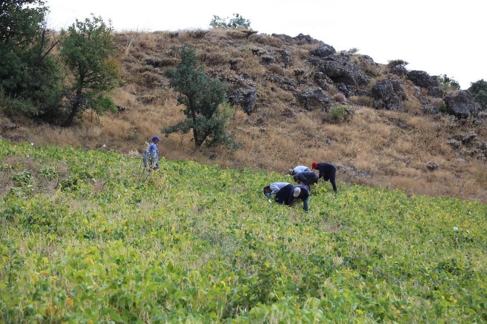 Ata tohumlarıyla üretilen kuru fasulye, rüzgar çağrılarak ayıklanıyor ata tohumlariyla uretilen kuru fasulye ruzgar cagrilarak ayiklaniyor 3 DfcM9dSy