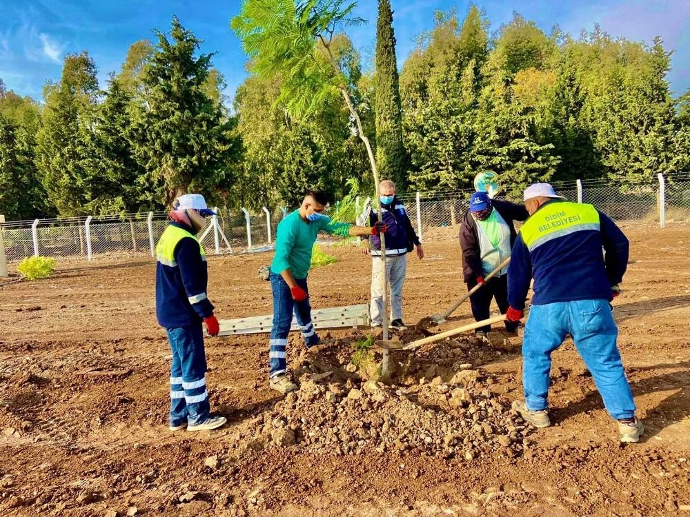 Didim Jakaranda ağaçları ile güzelleşiyor didim jakaranda agaclari ile guzellesiyor 2 T49py1rQ