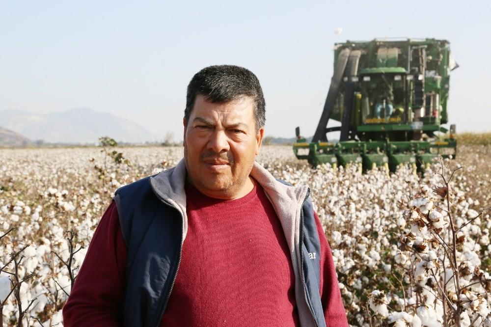 Söke Ovası'nda pamuk hasadında sona yaklaşıldı soke ovasinda pamuk hasadinda sona yaklasildi 2 7jgfJOgm