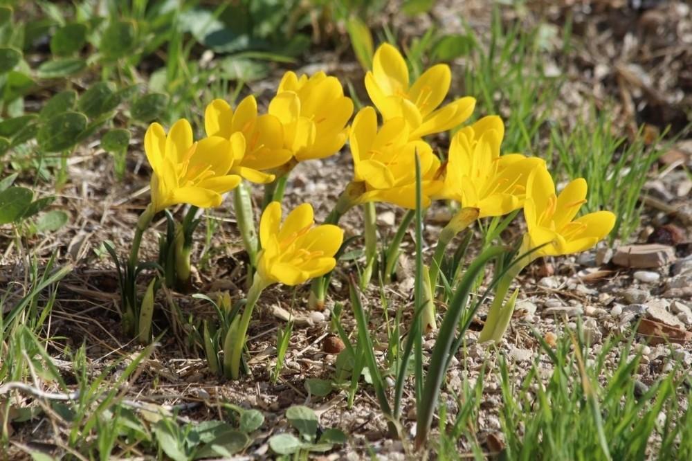Tarihi Güvercinada'nın doğal çiçekleri açmaya başladı tarihi guvercinadanin dogal cicekleri acmaya basladi 2 si5XQplk