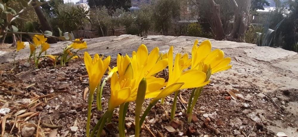 Tarihi Güvercinada'nın doğal çiçekleri açmaya başladı tarihi guvercinadanin dogal cicekleri acmaya basladi 3 nLp5cSb6