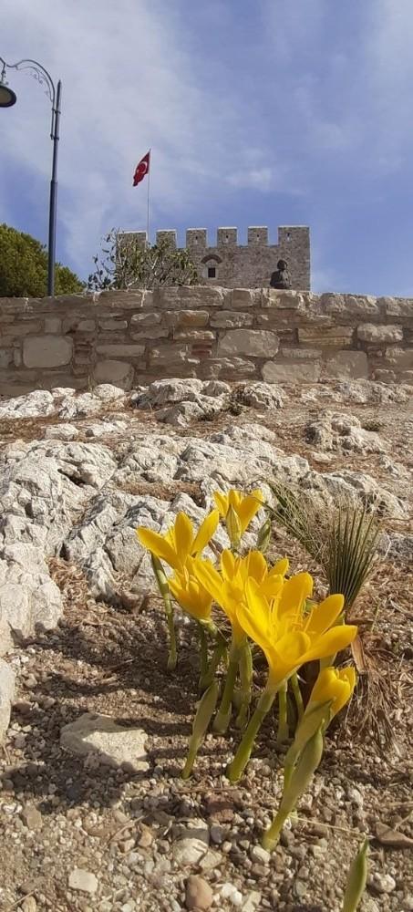 Tarihi Güvercinada'nın doğal çiçekleri açmaya başladı tarihi guvercinadanin dogal cicekleri acmaya basladi 5 g95lnpWn