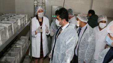ADÜ Ziraat Fakültesi Kaşar Peyniri Üretim Tesisi açılışı gerçekleşti adu ziraat fakultesi kasar peyniri uretim tesisi acilisi gerceklesti ysIEEGlF