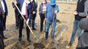 Aydın'da 21 bin 700 adet erkenci kayısı fidanı dağıtıldı aydinda 21 bin 700 adet erkenci kayisi fidani dagitildi YWysGvMS